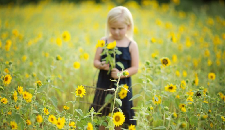 Wild Sunflowers | Mini Sessions | Greensboro NC Family Photographer